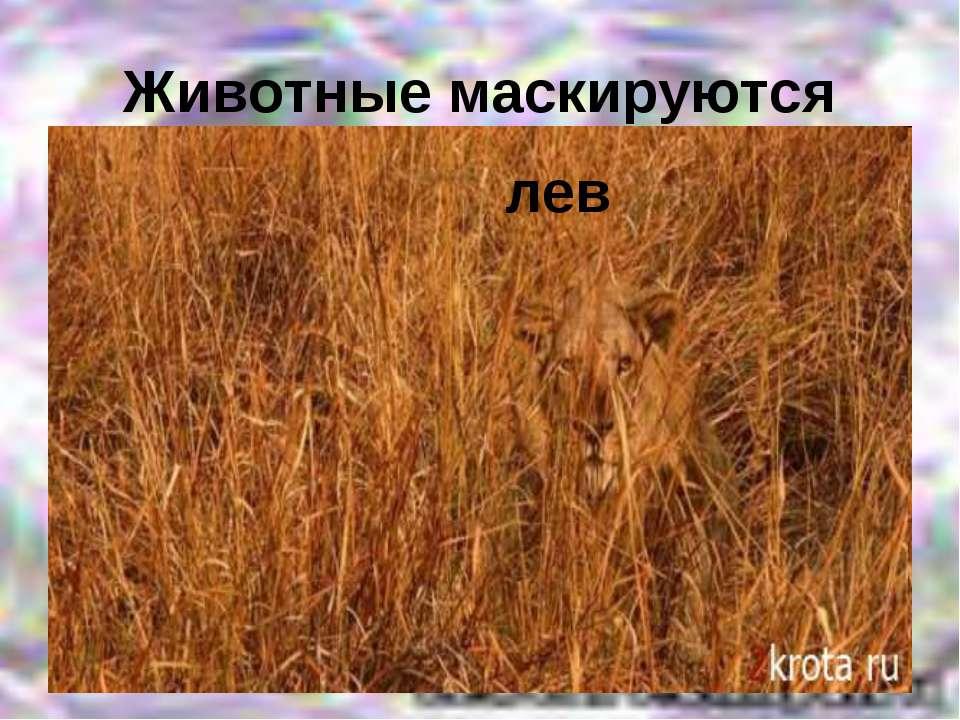 Животные маскируются лев