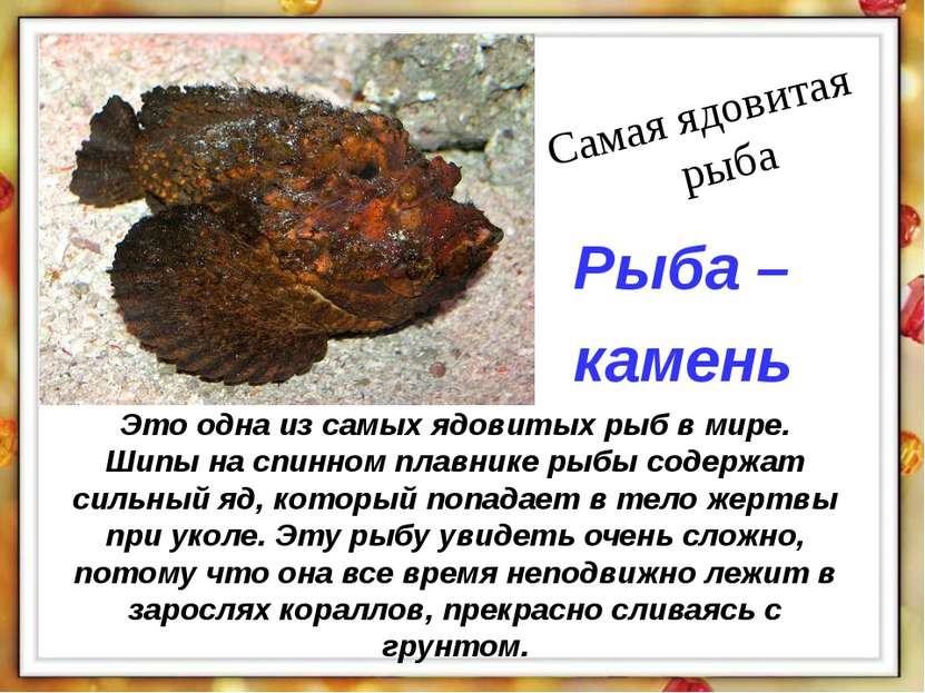 Это одна из самых ядовитых рыб в мире. Шипы на спинном плавнике рыбы содержат...
