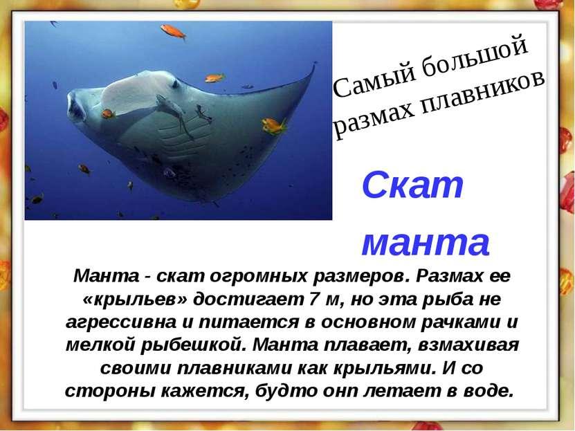 Манта - скат огромных размеров. Размах ее «крыльев» достигает 7 м, но эта рыб...