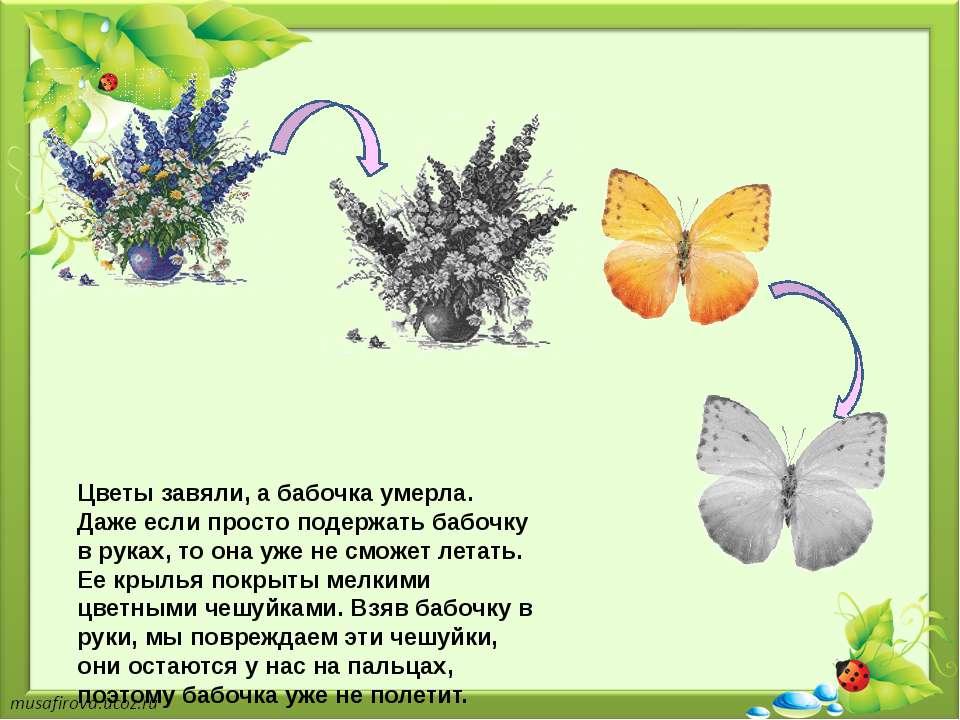 Цветы завяли, а бабочка умерла. Даже если просто подержать бабочку в руках, т...