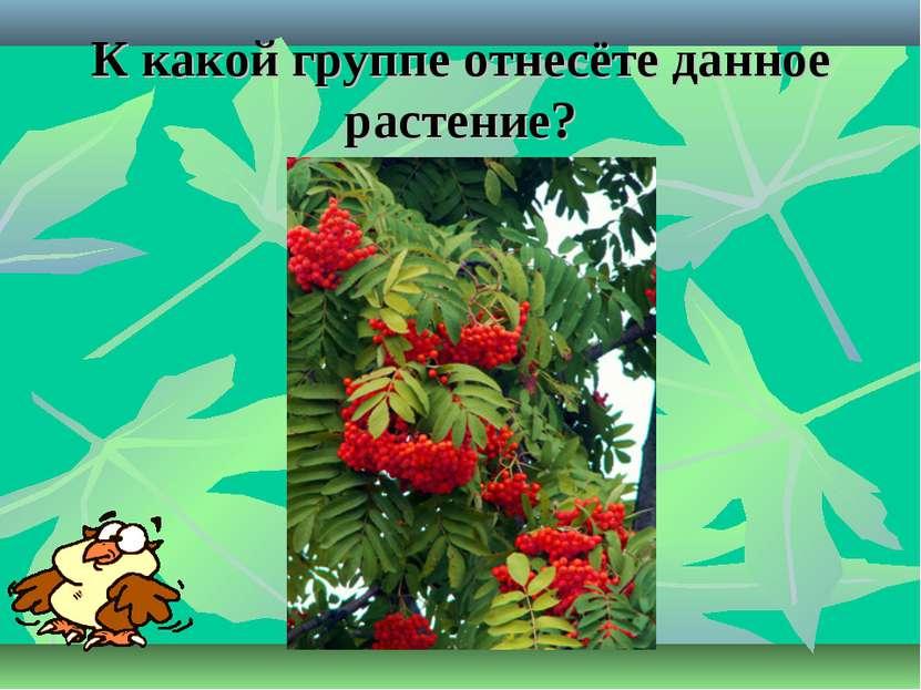 К какой группе отнесёте данное растение?
