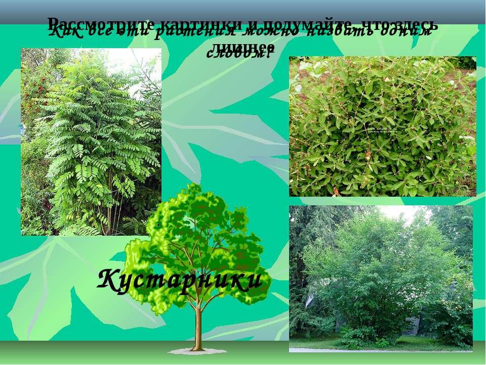 Рассмотрите картинки и подумайте, что здесь лишнее Как все эти растения можно...