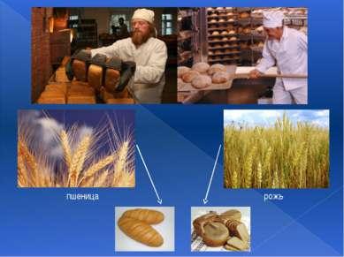 пшеница рожь