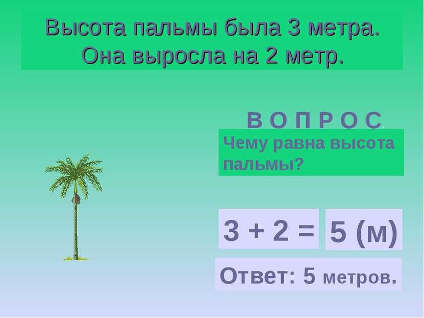 Высота пальмы была 3 метра. Она выросла на 2 метр. В О П Р О С. Чему равна вы...