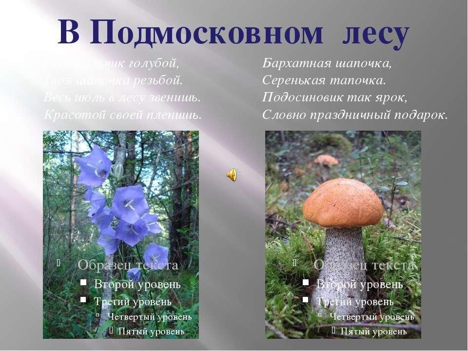 В Подмосковном лесу