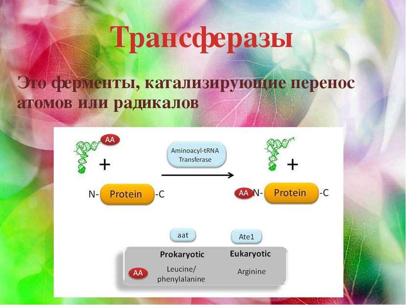 Трансферазы Это ферменты, катализирующие перенос атомов или радикалов