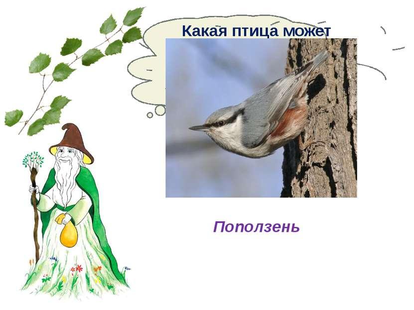 Какая птица может передвигаться по стволу дерева вниз и вверх? Поползень
