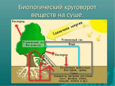 Биологический круговорот веществ на суше.