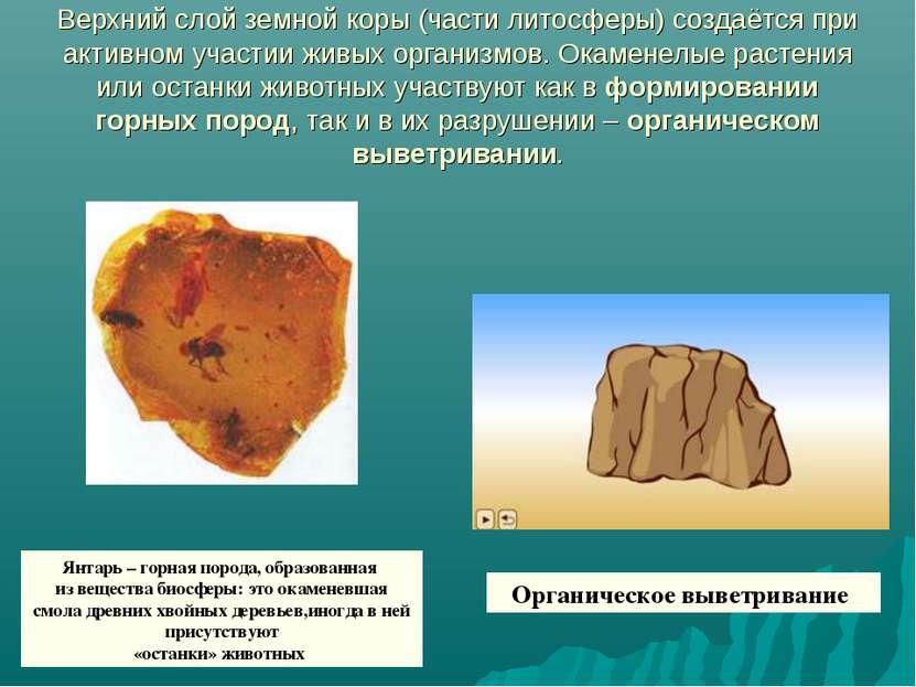 Верхний слой земной коры (части литосферы) создаётся при активном участии жив...
