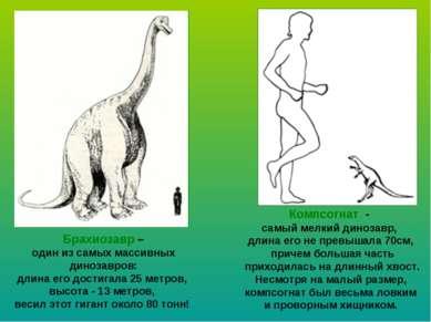 Брахиозавр – один из самых массивных динозавров: длина его достигала 25 метро...