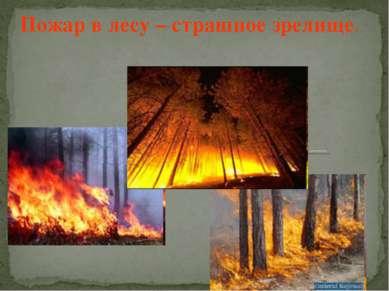 Пожар в лесу – страшное зрелище.