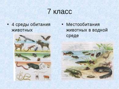 7 класс 4 среды обитания животных Местообитания животных в водной среде