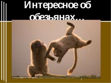 Интересное об обезьянах…