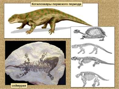 Котилозавры пермского периода сеймурия