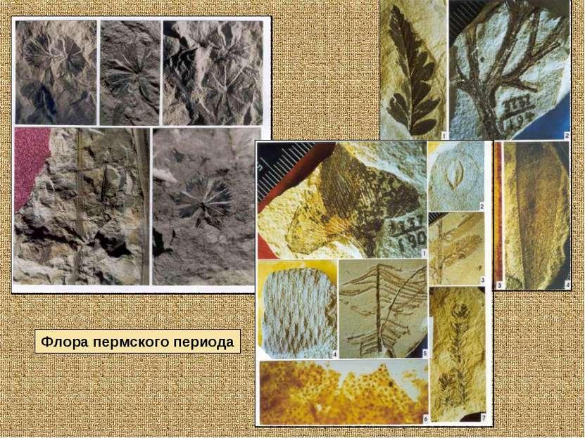 Флора пермского периода