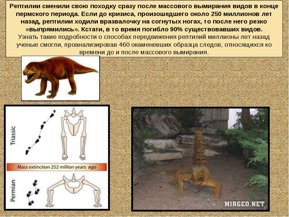 Рептилии сменили свою походку сразу после массового вымирания видов в конце п...