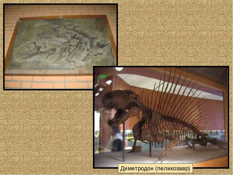 Диметродон (пеликозавр)
