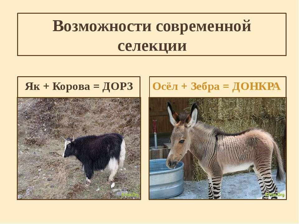 Возможности современной селекции Як + Корова = ДОРЗ Осёл + Зебра = ДОНКРА