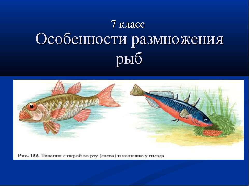 Особенности размножения рыб 7 класс