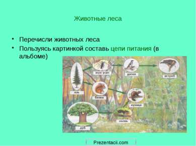 Животные леса Перечисли животных леса Пользуясь картинкой составь цепи питани...