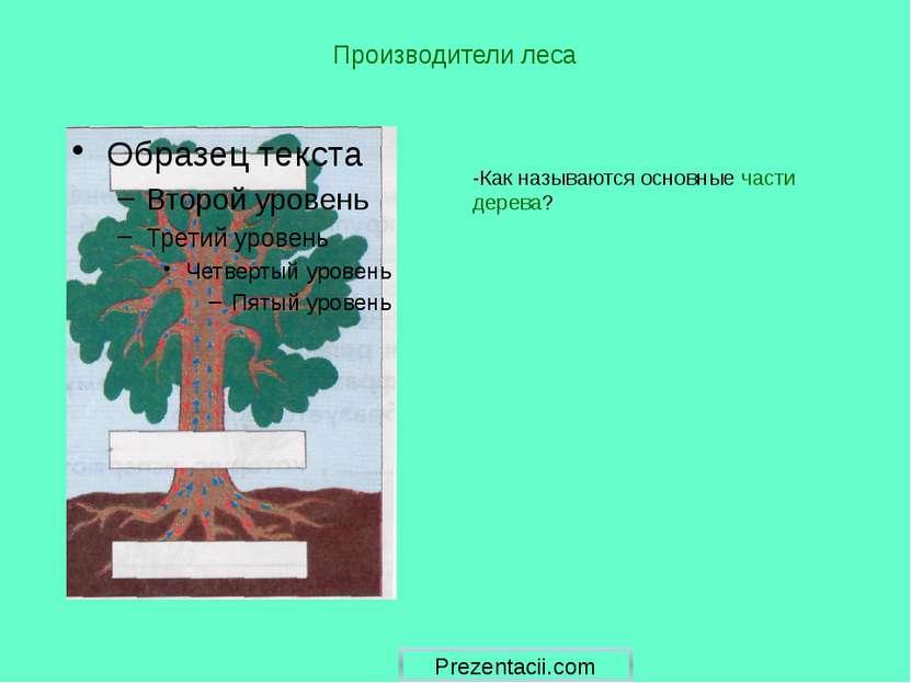 Производители леса -Как называются основные части дерева? Prezentacii.com