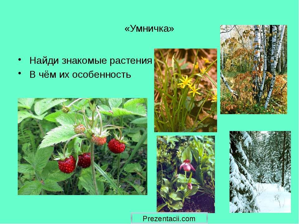 «Умничка» Найди знакомые растения В чём их особенность