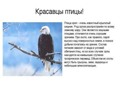 Красавцы птицы! Птица орел - очень известный крылатый хищник. Род орлов распр...