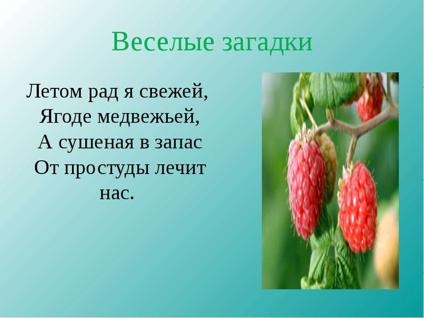 Веселые загадки Летом рад я свежей, Ягоде медвежьей, А сушеная в запас От про...