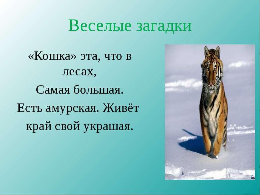 Веселые загадки «Кошка» эта, что в лесах, Самая большая. Есть амурская. Живёт...