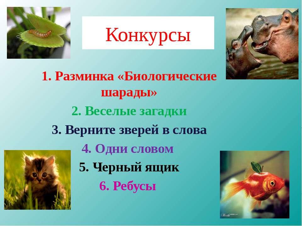 Конкурсы 1. Разминка «Биологические шарады» 2. Веселые загадки 3. Верните зве...