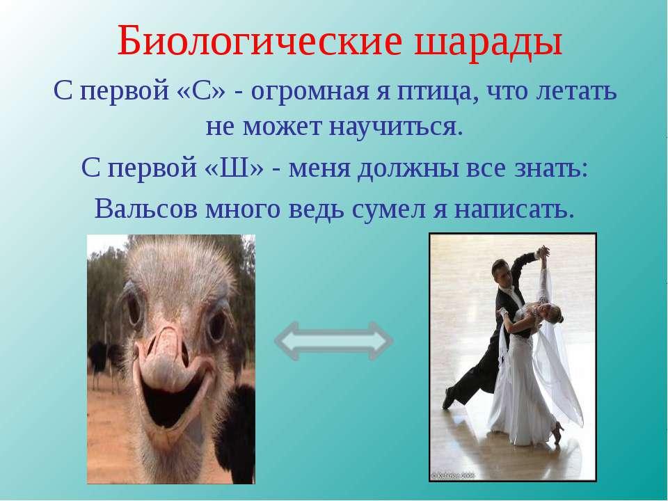 Биологические шарады С первой «С» - огромная я птица, что летать не может нау...