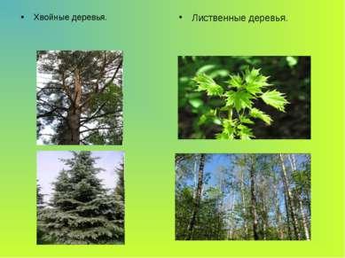 Хвойные деревья. Лиственные деревья.