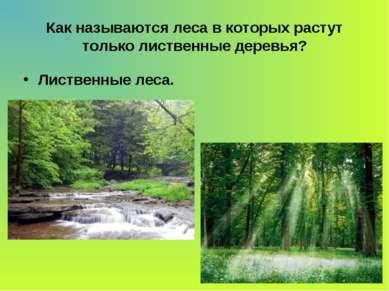Как называются леса в которых растут только лиственные деревья? Лиственные леса.
