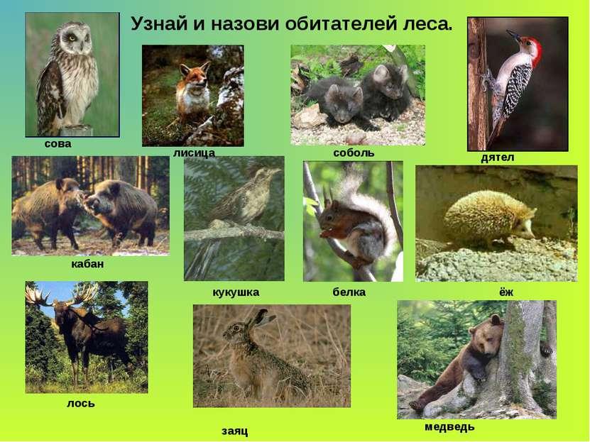 Узнай и назови обитателей леса. сова кабан лисица соболь кукушка лось заяц дя...