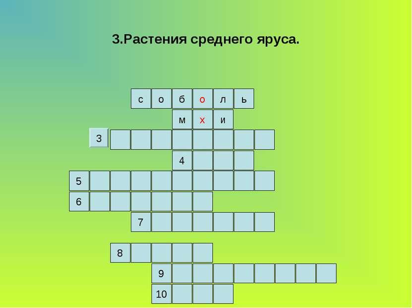 3.Растения среднего яруса. ь л о б о с и м х 4 5 6 7 9 8 10 3
