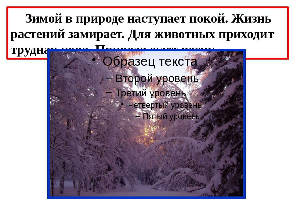 Зимой в природе наступает покой. Жизнь растений замирает. Для животных приход...