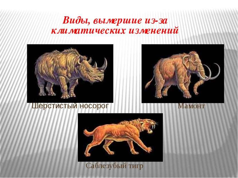 Виды, вымершие из-за климатических изменений Шерстистый носорог Мамонт Саблез...