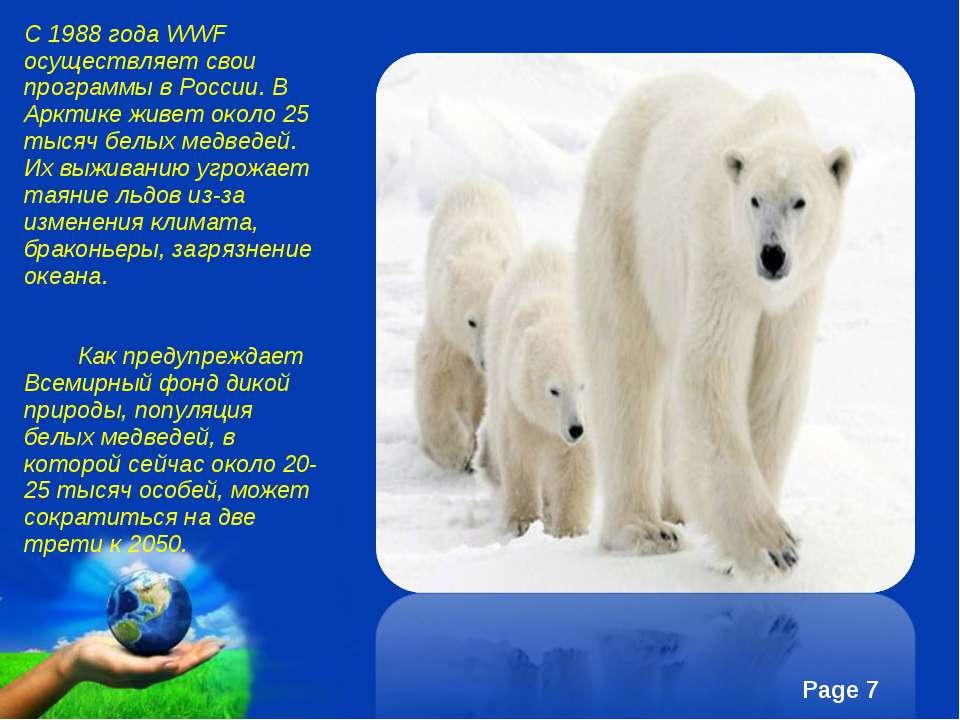С 1988 года WWF осуществляет свои программы в России. В Арктике живет около 2...
