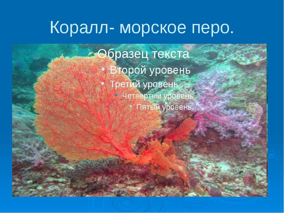Коралл- морское перо.