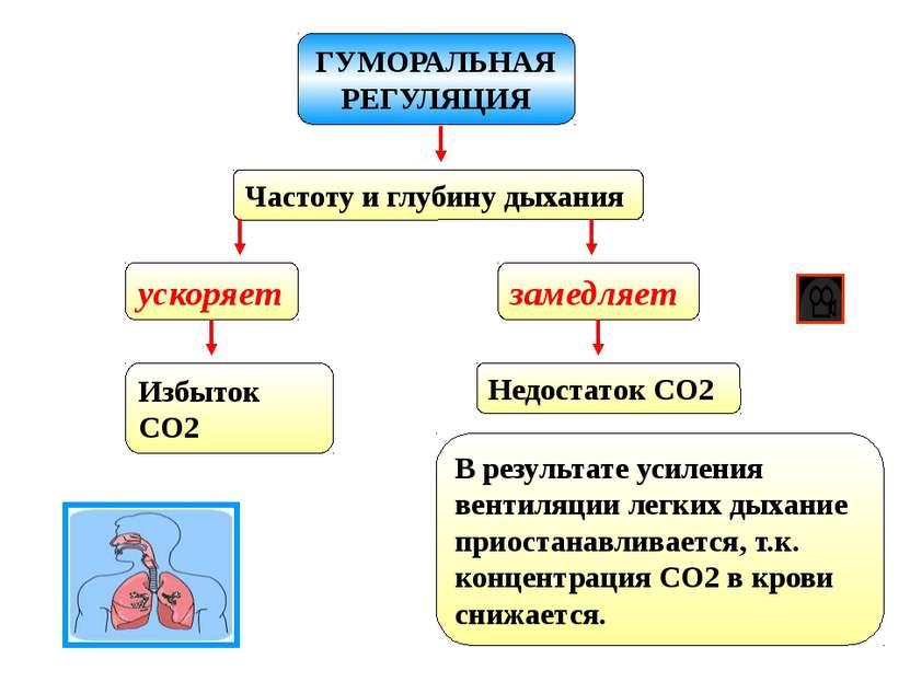 ГУМОРАЛЬНАЯ РЕГУЛЯЦИЯ Частоту и глубину дыхания ускоряет Избыток CO2 замедляе...