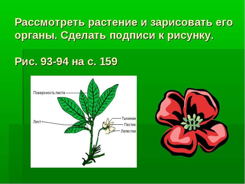 Рассмотреть растение и зарисовать его органы. Сделать подписи к рисунку. Рис....