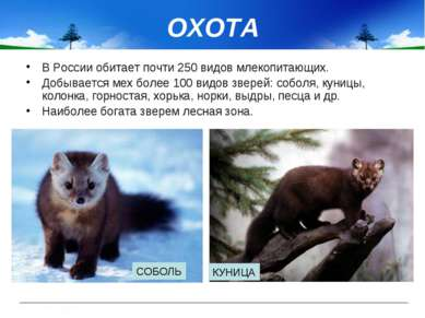 ОХОТА В России обитает почти 250 видов млекопитающих. Добывается мех более 10...