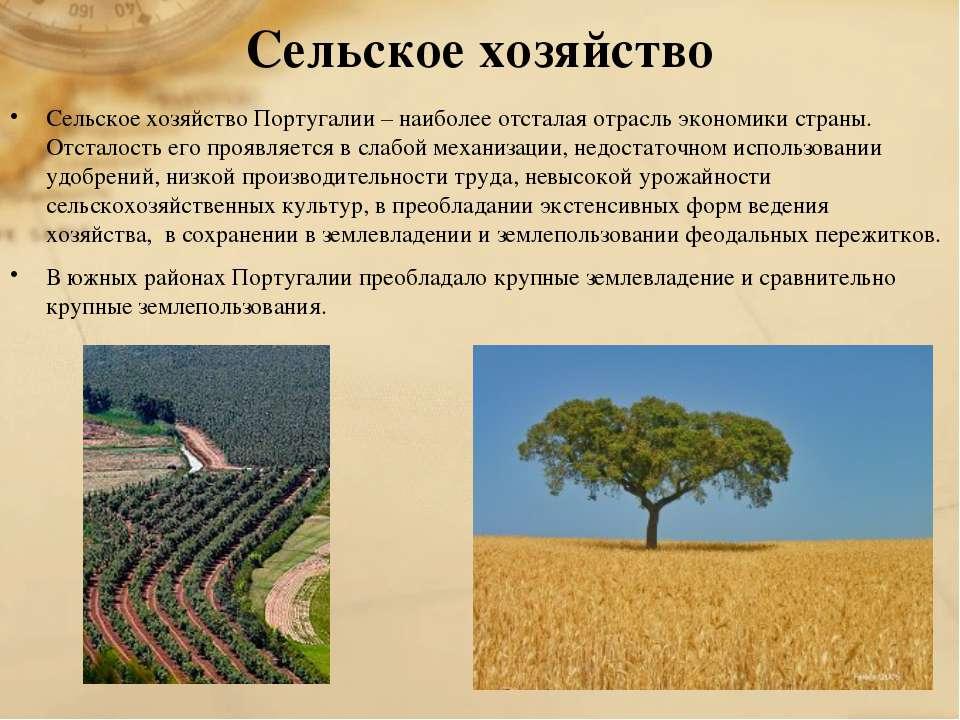 Сельское хозяйство Сельское хозяйство Португалии – наиболее отсталая отрасль ...