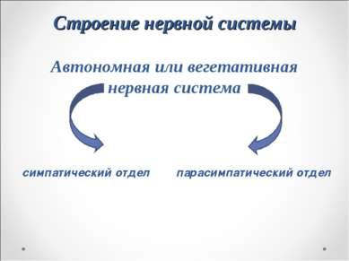 Строение нервной системы Автономная или вегетативная нервная система симпатич...