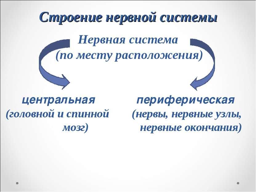 Строение нервной системы Нервная система (по месту расположения) центральная ...
