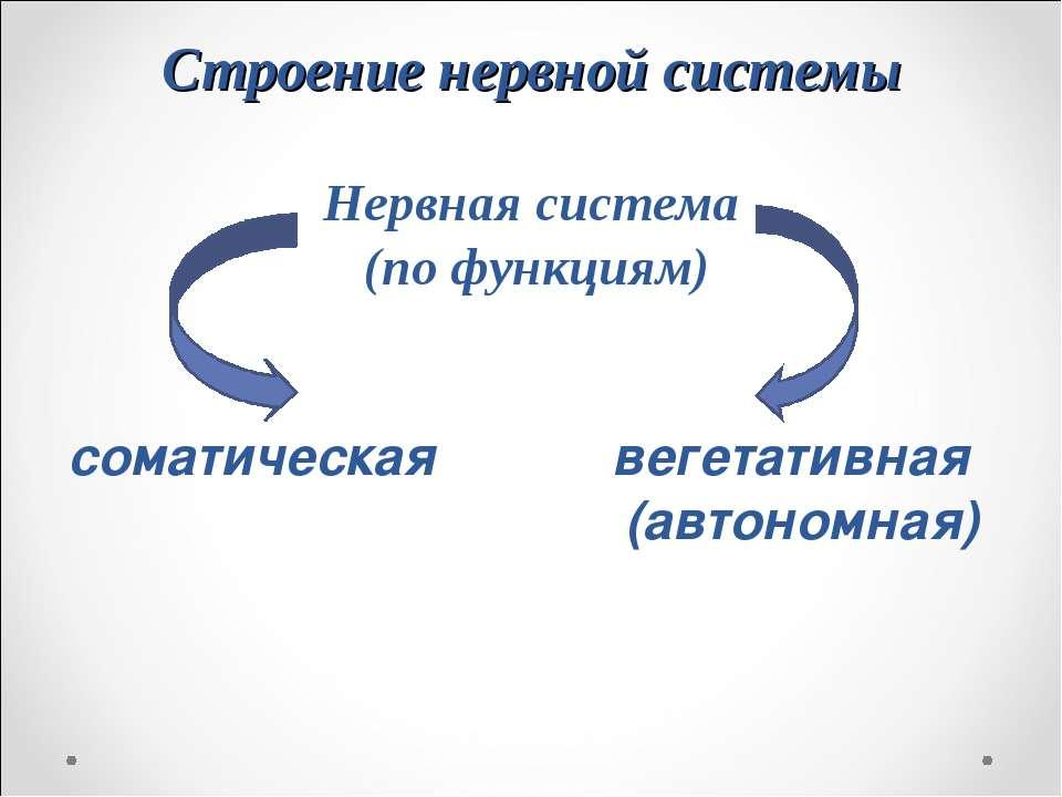 Строение нервной системы Нервная система (по функциям) соматическая вегетатив...