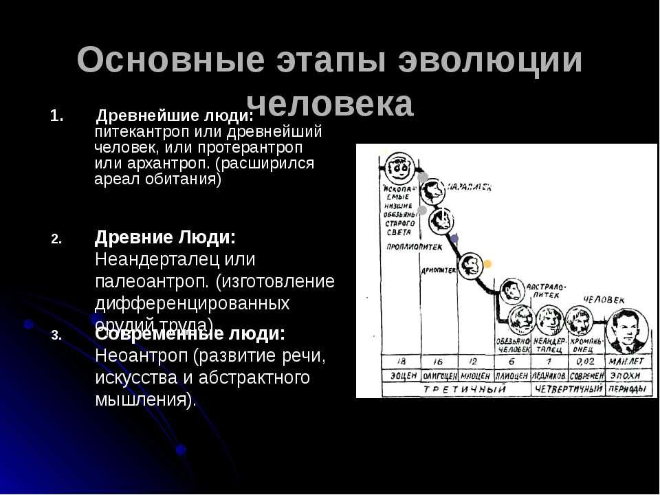 Основные этапы эволюции человека 1. Древнейшие люди: питекантроп или древнейш...