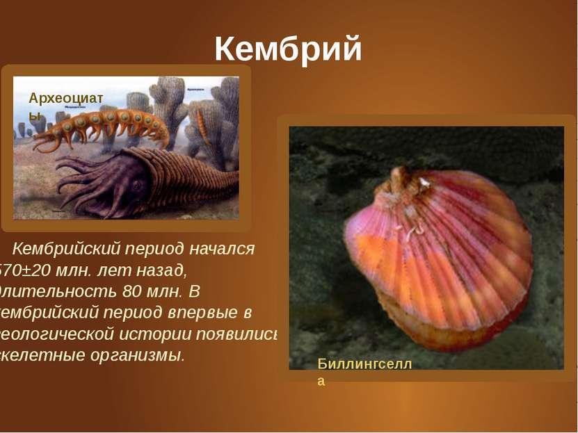 Кембрий Кембрийский период начался 570±20 млн. лет назад, длительность 80 млн...