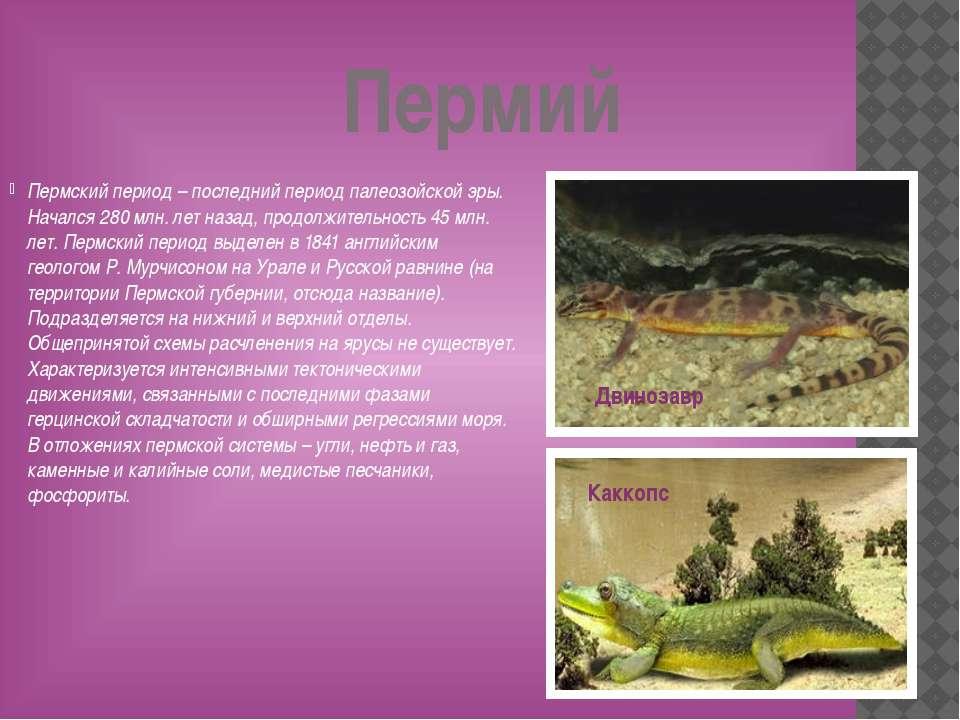 Пермий Пермский период – последний период палеозойской эры. Начался 280 млн. ...