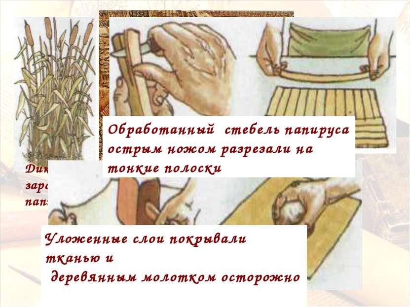 Дикие заросли папируса Древний Египет Обработанный стебель папируса острым но...